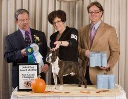Minuteman Boston Terrier Club--10/10/10