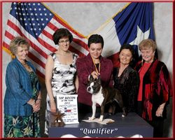 Boston Terrier of the Year--2012