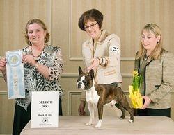 Boston Terrier Club of CT--3/18/12