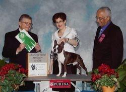 Boston Terrier Club of New York--2/12/11