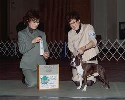Elm City Kennel Club--2/19/11