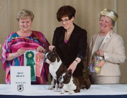 Boston Terrier Club of CT--3/19/11
