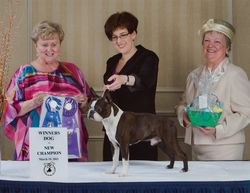 Boston Terrier Club of Connecticut--3/19/11