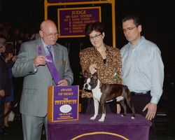 Westminster Kennel Club--2/14/11