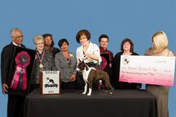 Boston Terrier Club of America--5/15/13