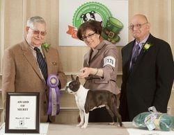 Boston Terrier Club of CT--3/15/14
