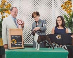 Boston Terrier Club of MD--4/13/14