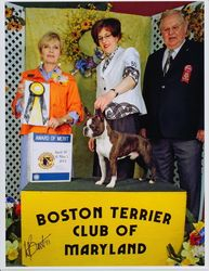 Boston Terrier Club of MD--4/30/11