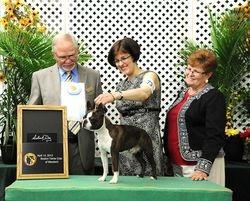 Boston Terrier Club of MD--4/14/12