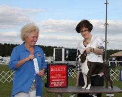 Florida Suncoast Boston Terrier Club--11/8/13