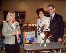 Kennel Club of Philadelphia--11/19/11
