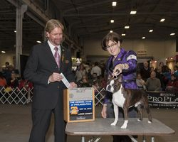 Kennel Club of Philadelphia--11/16/13