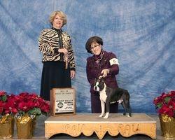 Lehigh Valley Kennel Club--12/14/13