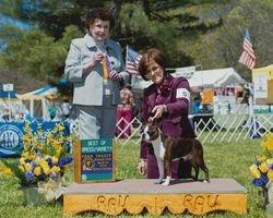 Penn Treaty Kennel Club--4/27/14