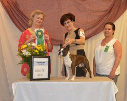 Tri-Angle Boston Terrier Breeders Club--8/4/12