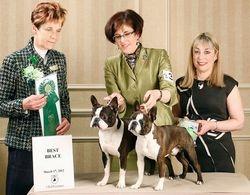 Boston Terrier Club of CT--3/17/12