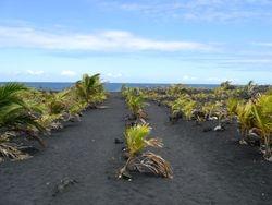 Trail to Black Sand Beach