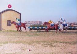 Shaalan's 1st Race