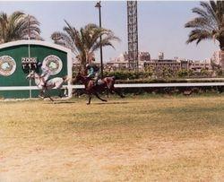 Shaalan's 4th Race