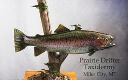 Rainbow trout  Reproduction