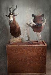 Blesbok & Warthog