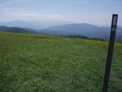 Max Patch Bald