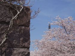 Cherry Blossoms in the FDR Memorial