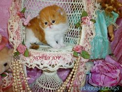 """""""HONEY JOY"""" IS RESERVED FOR SUSAN"""