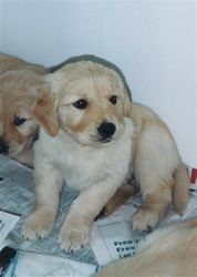 Maggie May/Keegan Litter - June 03