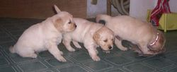 Oakley/Keegan Litter - February 2005