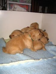 What a 6 puppy pile up looks like!
