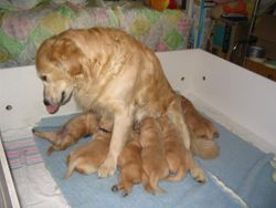 True and her babies on June 19th!