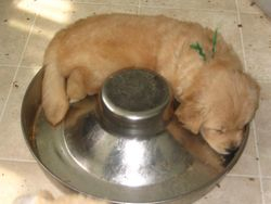 Asleep in the food dish - I see a pattern here!