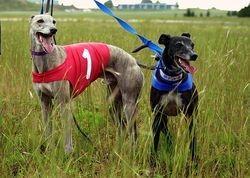 Beastro and Kyro ready to race!
