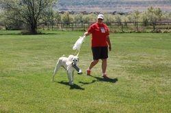 Carrie Nanney's Iron Dog Sam I Am,SRCX