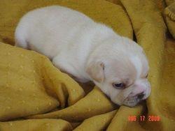 3 1/2 weeks old