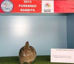 2013 Best Rabbit in Show