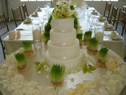 Green Orchids & Wedding Cake