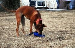 Khoi loves her toys.