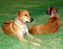 Khoi and Mika