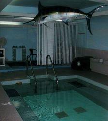 Den remodels spa with massage room