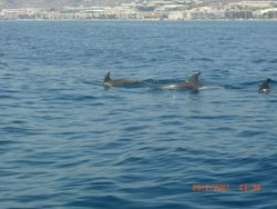 DOLPHINS OF TORROX BEACH