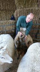 Sheep Shearer Mike Foot Trimming
