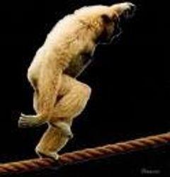 gibbon-ape