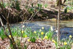 Creek that runs through horse pasture