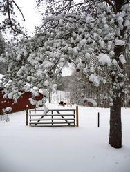 Horsebarn and pasture