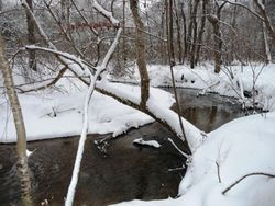 Creek along walking trail