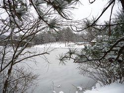 Lake from walking trail