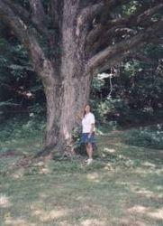 At the Tree