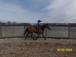 Feb 2020 Matt riding Ellie in round pen